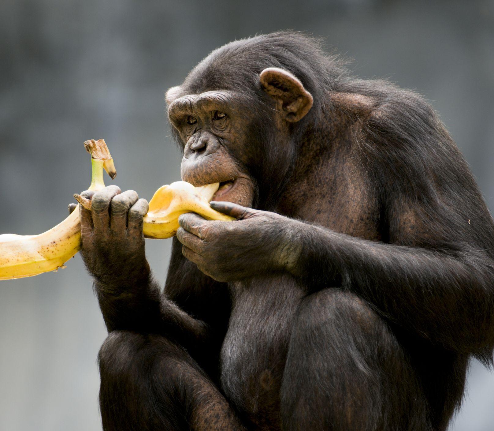 Jednoduché triky na zhadzovanie kíl: Inšpirujte sa u zvierat a schudnete!