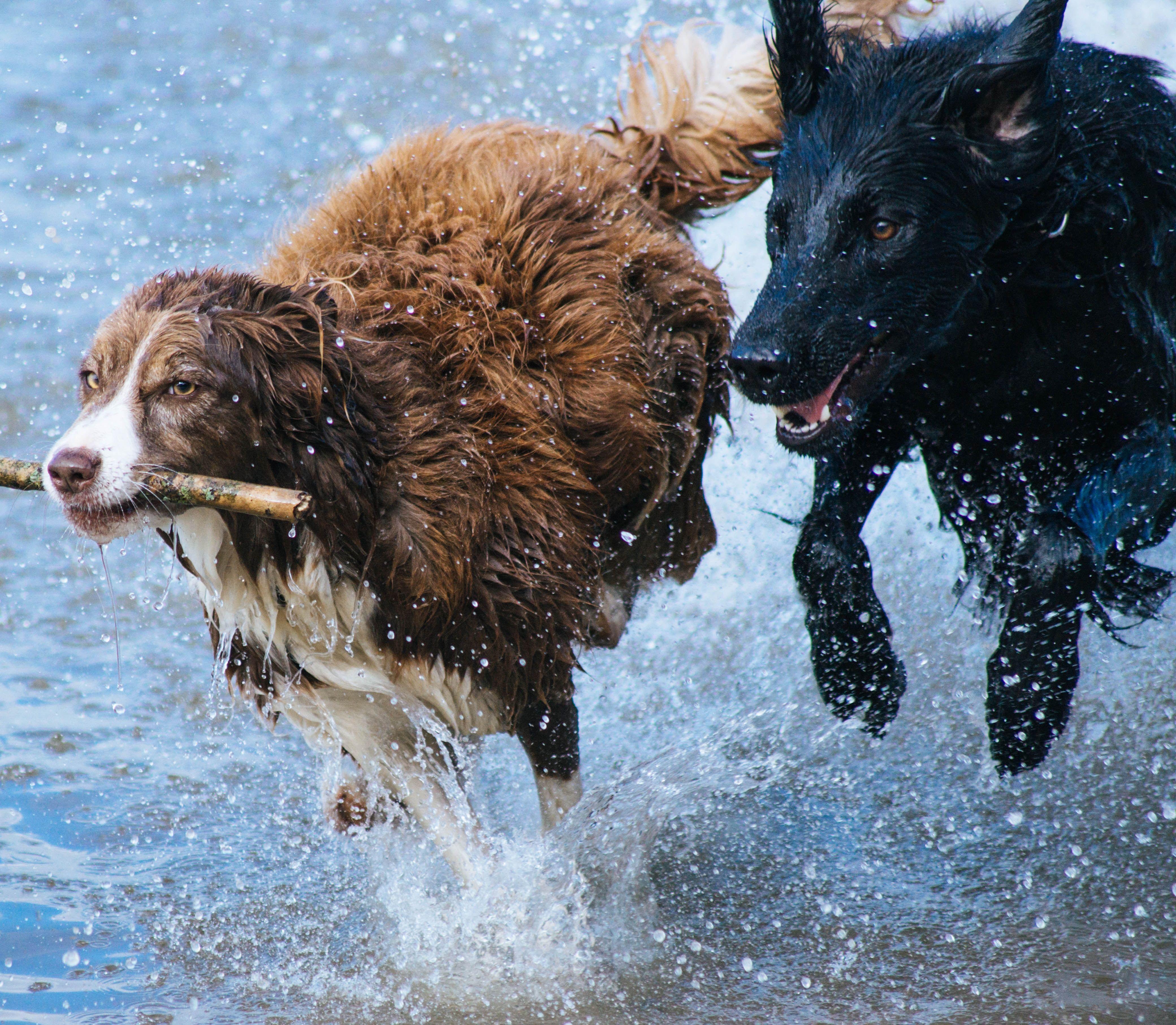Chudnite spolu s domácim zvieraťom: Predĺžite mu život a zlepšíte si kondíciu