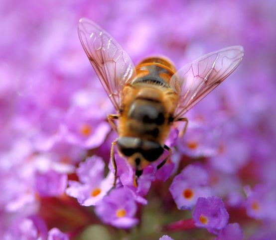 Včelia materská kašička: Dodá vám vitalitu a pomôže pri menopauze