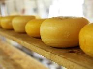 Môžeme jesť syry s plesňou? Pri výbere syra by sme sa mali držať týchto zásad!