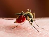 Janu (49) v cudzine poštípal komár, stalo sa to najhoršie: Po 20 dňoch záhadné príznaky!