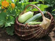 Máme sa obávať účinkov vlastnoručne dopestovanej úrody? Nebezpečná látka, o ktorej málokto vie!