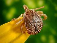 Jednoduchý trik proti malým parazitom: Celé leto na vás kliešte nepôjdu!